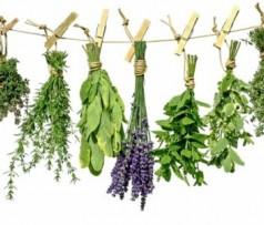 Природа поможет: травяные сборы