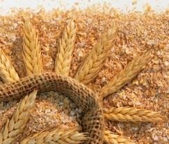 Сколько пользы в пшеничных отрубях