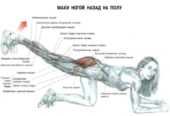 задние мышцы