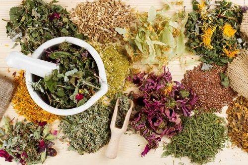 смесь трав для обмена веществ