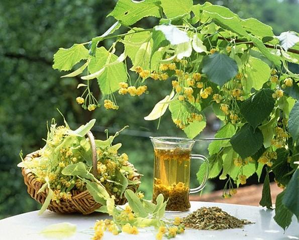 худение с липой,омелой медом и лимоном рецепт