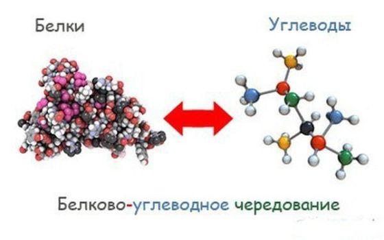 белки углеводы и обратно