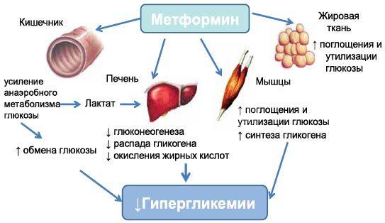 действие препарат глюкофаж лонг 750