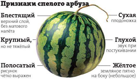 факторы спелого арбуза