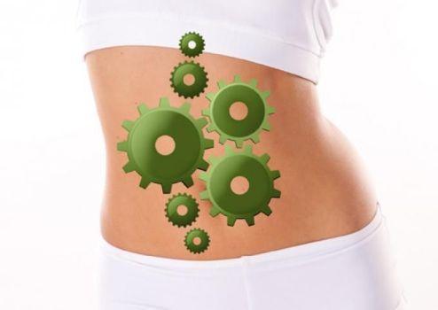 механизм работы желудка